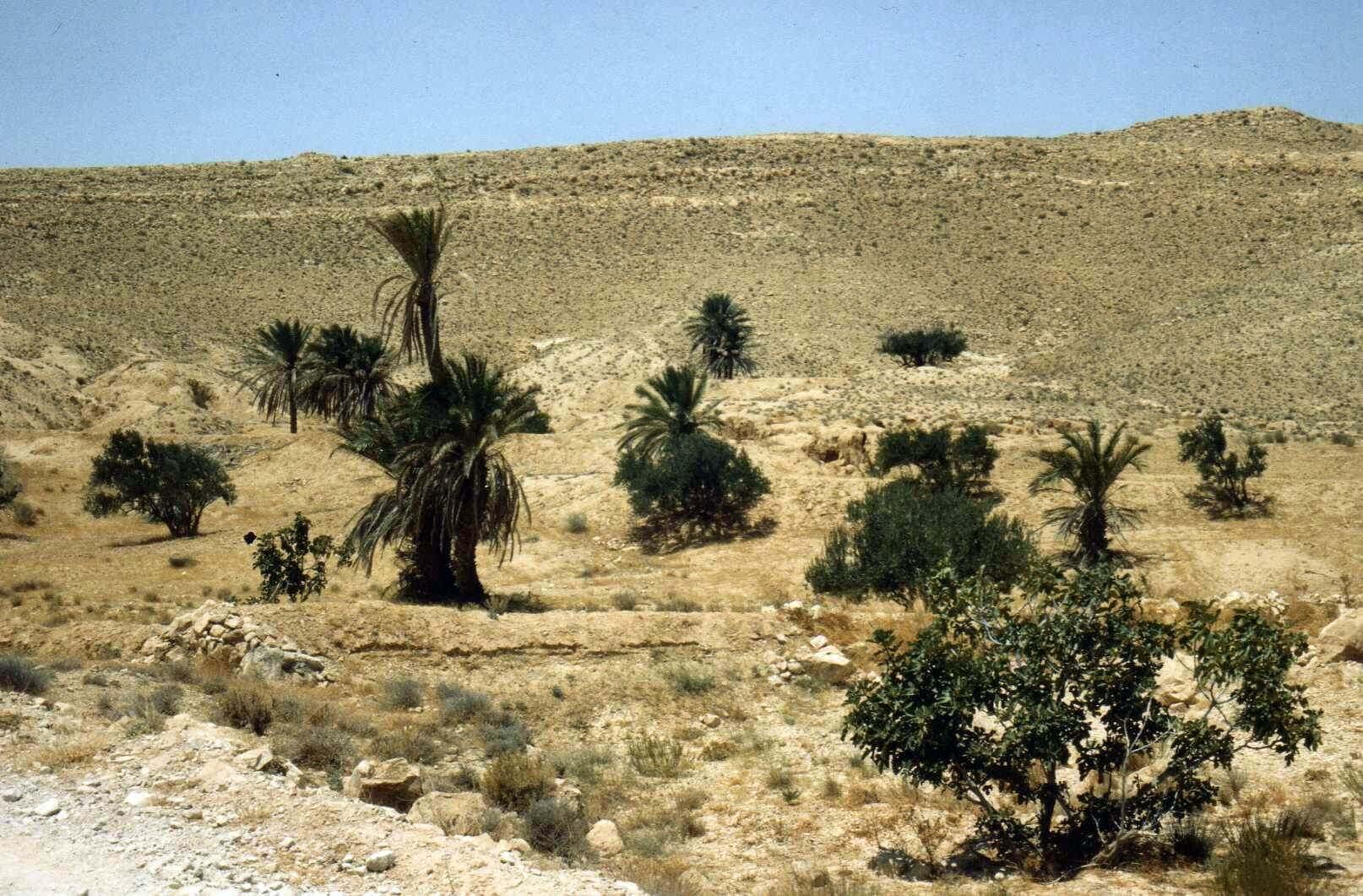 Raid moto 4x4 Tunisie Wild Spot Gabes Matmata