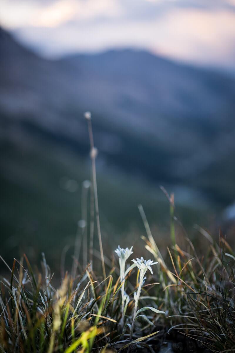 Trip photo Écrins Hautes Vallées La Grave la Meije Galibier Lauteret