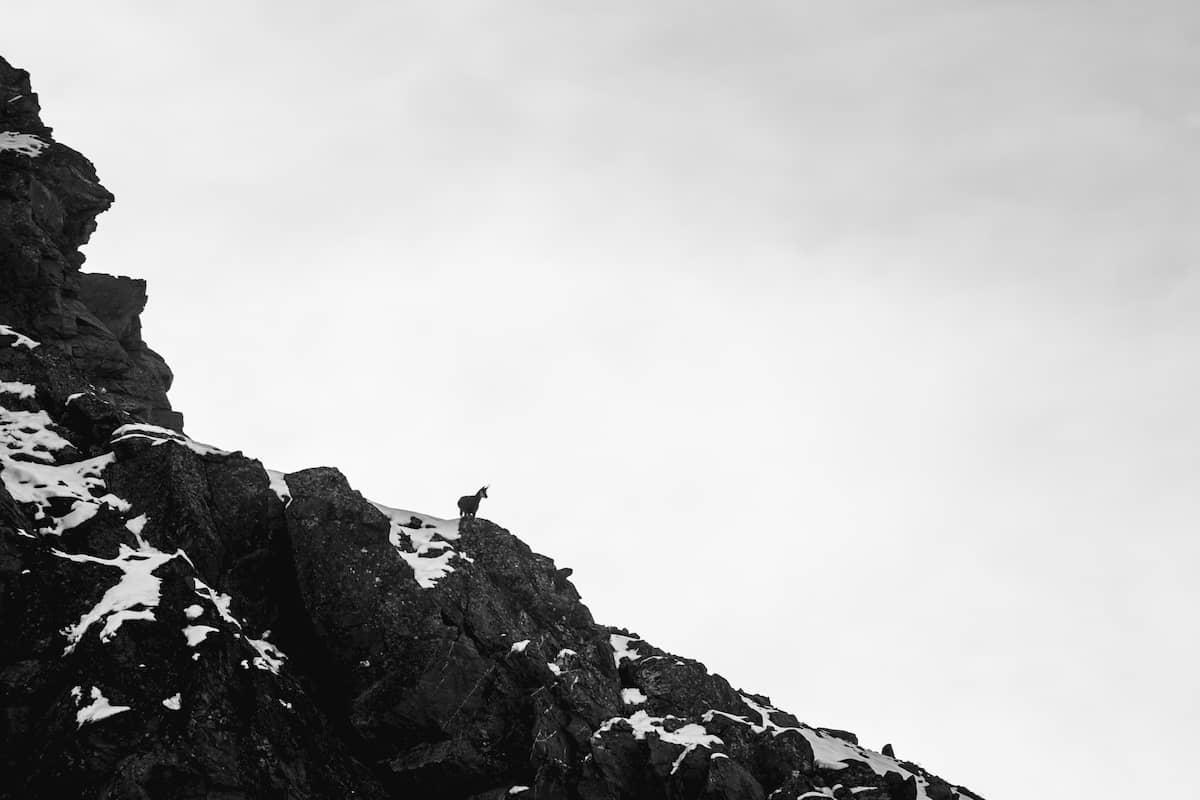 Chamois Randonnée Lac Long Vallée Clarée Hautes Alpes Névache Wild Spot photographie aventure spot trip photo